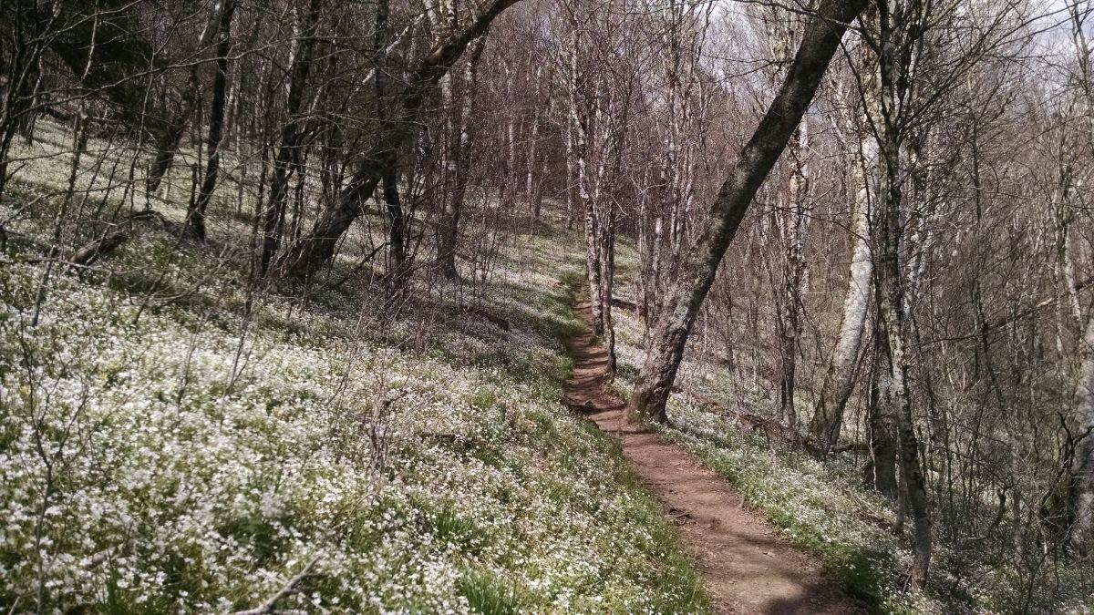 Trail Magic with a Taste ofBuffalo