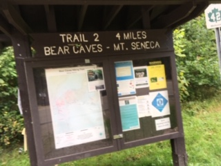 Did not see bears. Disappointed. Not!